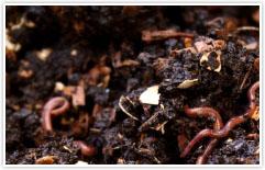 Worm farming worms